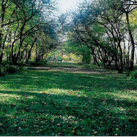 Large forest preserve