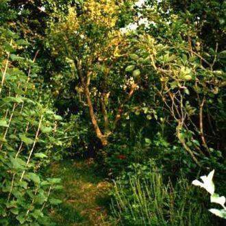 Fruit forest sculpture garden on humboldt boulevard!