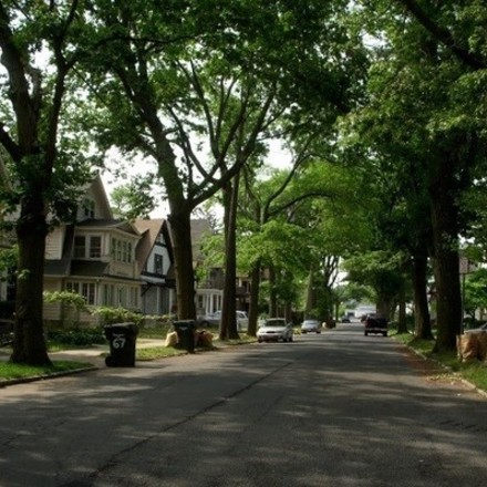 Large street trees 3