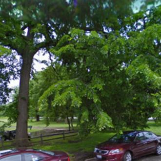 Improve Parks in Austin