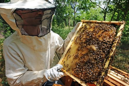 Bee Keeping in Yorkville